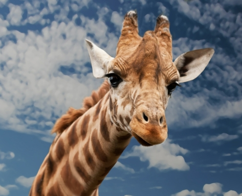 Comunicazione Non Violenta: gruppi di pratica (giraffa)