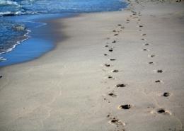 prendersi in carico orme spiaggia